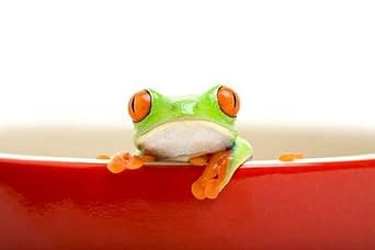 Lower caregiver turnover frog in a pot